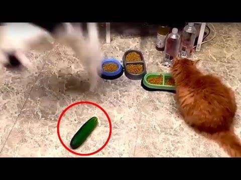 INCREDIBILE!!! Avreste mai detto questo sui Gatti?!?!