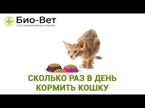 Сколько раз в день кормить кошку или кота ��/ Сеть Ветклиник Био-Вет