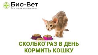 Сколько раз в день кормить кошку. Ветеринарная клиника Био-Вет.
