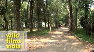 Walk inside Botanical Garden of Pondicherry