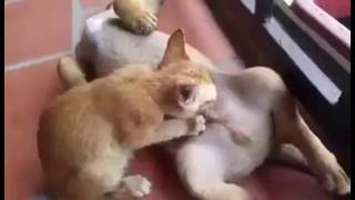 Наглый котяра