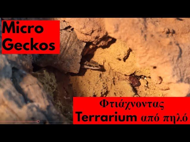Tropiocolotes tripolitanus & Κατασκευή ερημικού τερραριουμ με πηλό | Feeders Strs 86