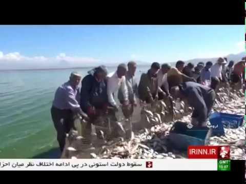 Iran Fish farming in Hasanlou Dam lake, Urmia county پرورش ماهي در درياچه سد حسنلو اورميه ايران