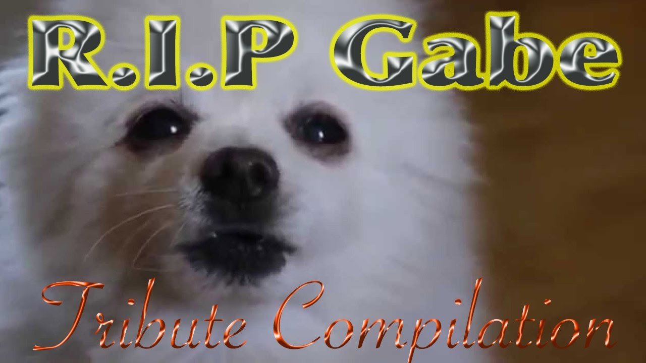 Download Gabe the Dog Tribute Compilation - Tribute to the Bork Master  - Rest In Peace Gabe