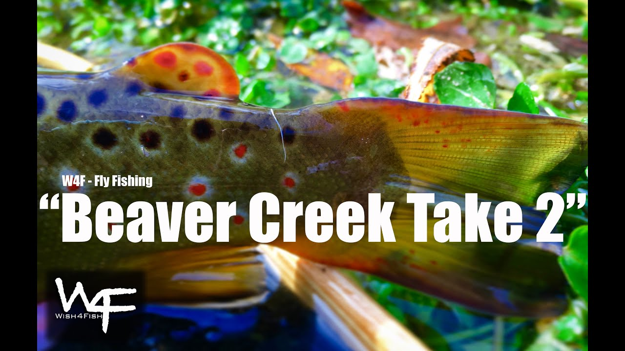 W4f fly fishing small streams beaver creek take 2 for Beaver creek fly fishing