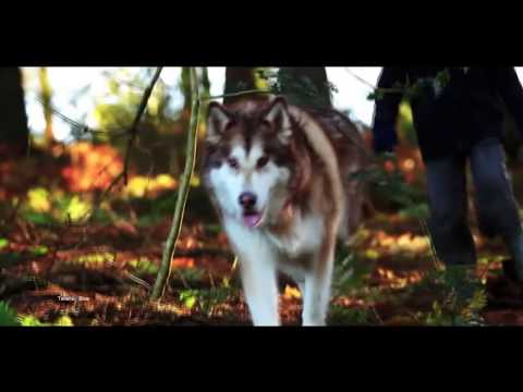 Leo Rojas - Der mit dem Wolf tanzt (Dances with Wolves)