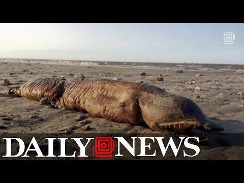 Mysterious creature identified on Texas beach after Hurricane Harvey
