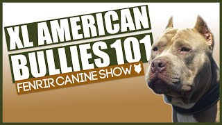 XL American Bully 101! EVERYTHING YOU NEED TO KNOW About XL American Bully Puppies!