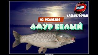 НАШИ КЛЕВЫЕ ТОЧКИ Русская рыбалка 4 Карп Белый Амур на о Медвежье 55 33