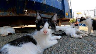 お昼寝の時間も起きて遊び廻るチビ猫たち