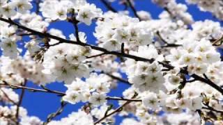 Žoržs Siksna - Baltas Ābeles Zied