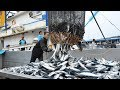 Big Catch Fishing in The Deep Sea With Big Boat - Amazing Tuna Fish Processing Skill