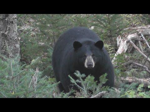 A Sampling of Nova Scotia Buck, Bull and Boar Sightings From the  2014 Season