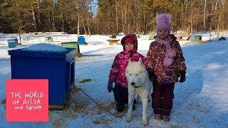 Деревня ездовых собак Серебро Севера