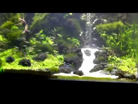 Underwater waterfall aquascape YouTube - YouTube