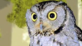 """""""Как сова охотится в полной темноте?"""" - познавательный мультфильм """"Формула Ума!"""")"""