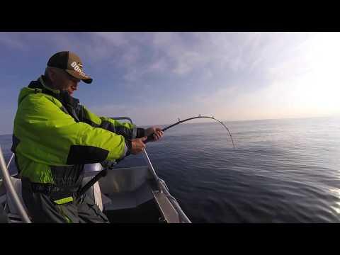 Havsfiske i Norge 2017