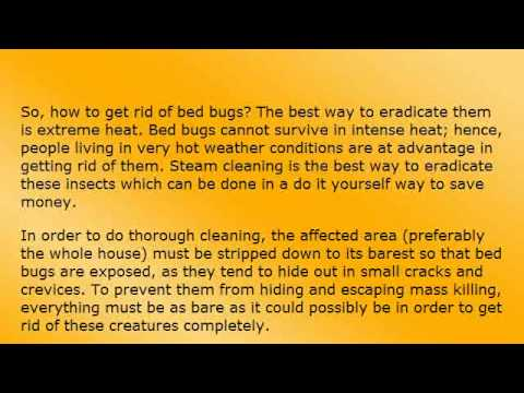 how to get rid of bugs at night