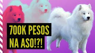 Mga ASO ng RICH KIDS  20 na PINAKAMAHAL na DOG BREEDS sa BUONG MUNDO