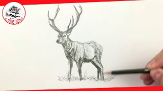 How To Draw a Deer with Pencil Drawing Techniques (Subtitled)