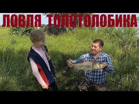 Ловля толстолобика в начале июня / Семейный выезд на рыбалку
