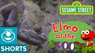 Sesame Street: What Do Zoo Animals Eat? (Elmo At The Zoo)