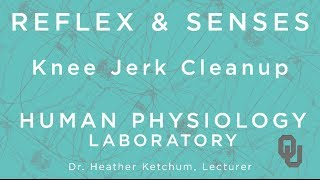 Knee Jerk Clean Up for Students | Reflex & Senses | Human Physiology | Dr. Ketchum