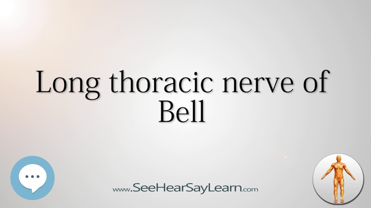 Long Thoracic Nerve Of Bell Anatomy Named After People Youtube