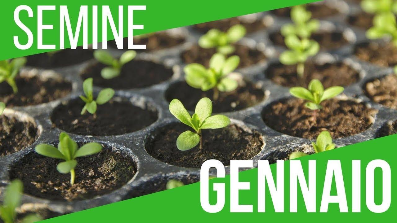 Cosa Seminare A Gennaio semina ortaggi gennaio, febbraio e marzo | video extra | orto e giardinaggio