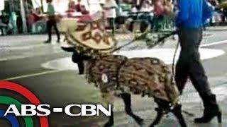 Mga kanding bida sa fashion show | TV Patrol Panay