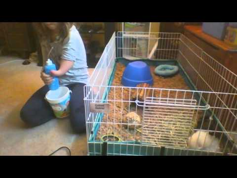 The Best Water Bottle For A Guinea Pig (Doesn't Leak)