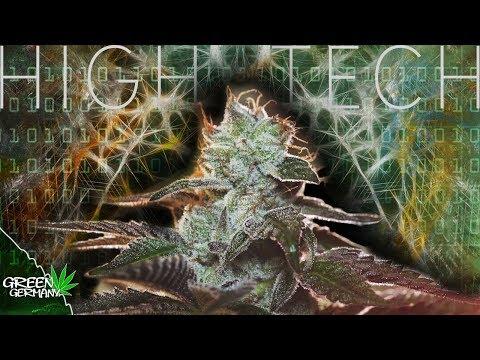 HighTech + BIO = PERFEKTER HomeGrow?!