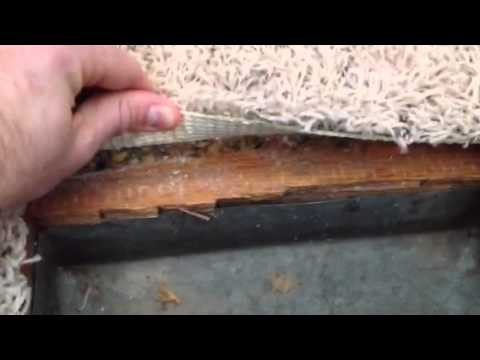 How to know if you have wood floors under your old carpet for Wood floor under carpet
