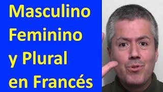 Francés: Masculino, femenino y plural / Curso de Francés Básico A1 Clase 12