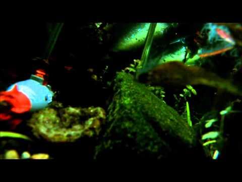 Submarine Aquarium