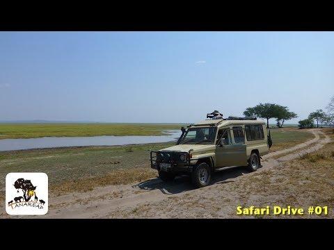 Safari drive #1 Ngorongoro Conservation Area Tanzania