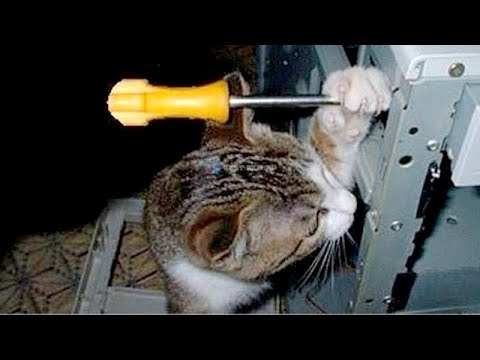 You probably HAVEN'T LAUGHED THAT HARD BEFORE! – Funny ANIMALS vs HUMAN TECHNOLOGY