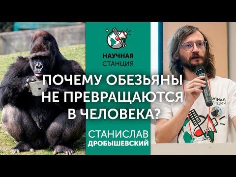 Почему обезьяны не превращаются в людей? Станислав Дробышевский