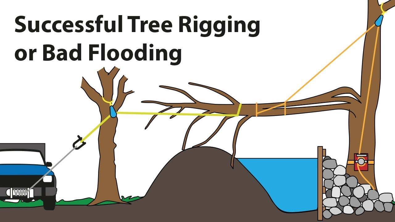 Successful Tree Rigging Or Bad Flooding Tree Climbing