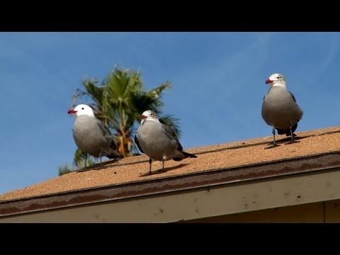 【HD】West Coast of the United States | アメリカ ~西海岸の風景~