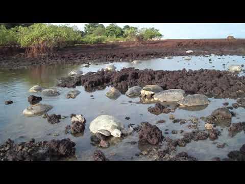 Tartarugas nas rochas