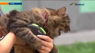 В Украине хотят регистрировать всех домашних животных