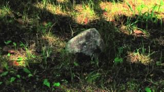 Камень в лесу. Лето.