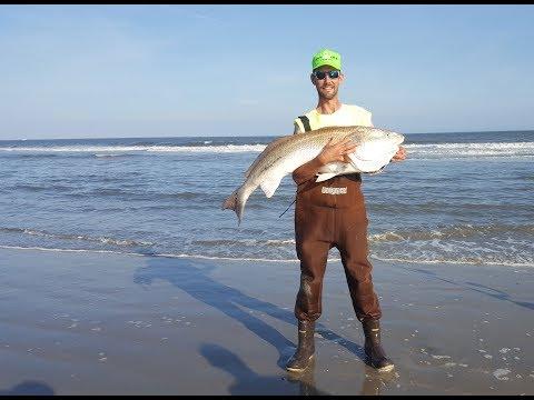 Surf Fishing 2018: Stripers - Blackdrum - Redfish