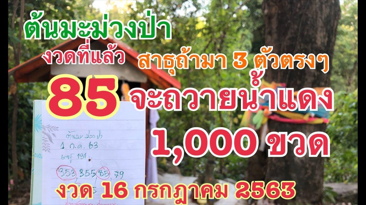 ต้นมะม่วงป่า แม่นต่อเนื่อง งวดที่แล้ว 85 เต็มๆ ถ้างวดนี้มา 3 ตัวจะถวาย 1,000 ขวด 16 ก.ค.63