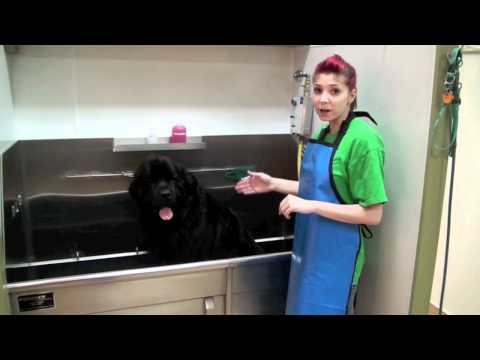 petsmart bather