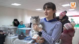 U news  На выставке свою дорогу домой нашли сразу несколько потерявшихся кошек