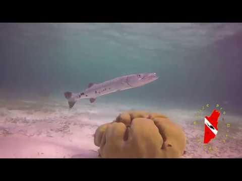 Hol Chan Marine Reserve, San Pedro Town, Belize C.A.