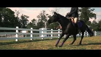 BLACK BEAUTY - Official International Trailer