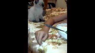 Котёнок помогает мне есть творог)))  Хозяйственный